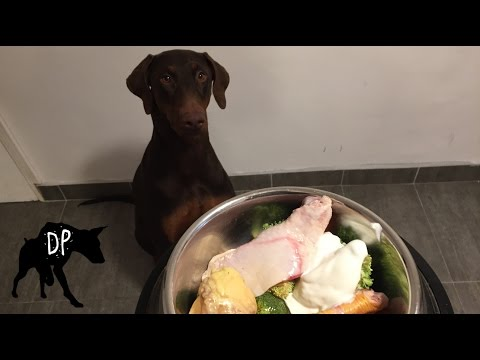 Doberman eating raw food diet for dogs | Raw Feeding Dogs