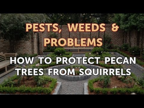 How to Protect Pecan Trees From Squirrels