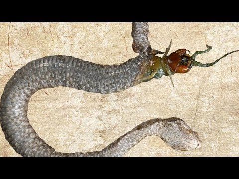 MOST Bizarre Things Found Inside GIANT Snakes