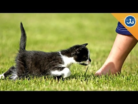 How to Stop Your Cat from Attacking Your Ankles
