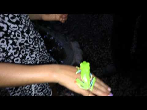 Leah holding a tree frog