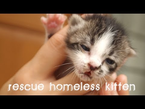 Rescue homeless Kitten