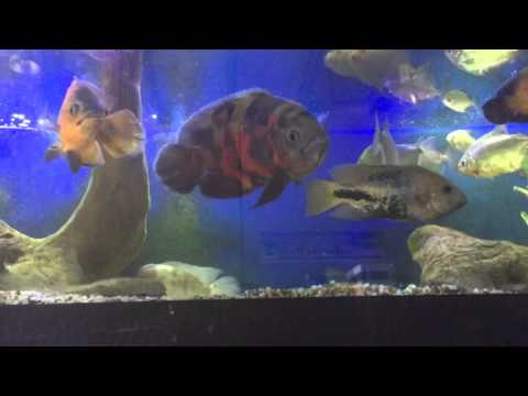 Growth size and speed with fish