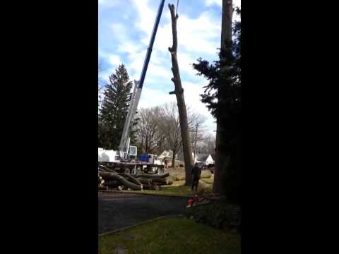 Removing the Trunk of a large dead tree