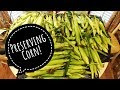 CORN! How To Freeze Corn on the Cob -  WHEW At All This CORN!!