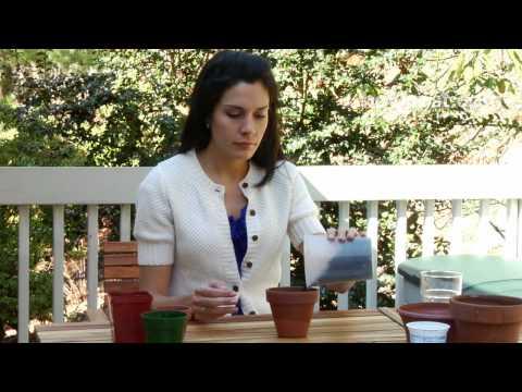 How to Grow an Herb Garden Indoors
