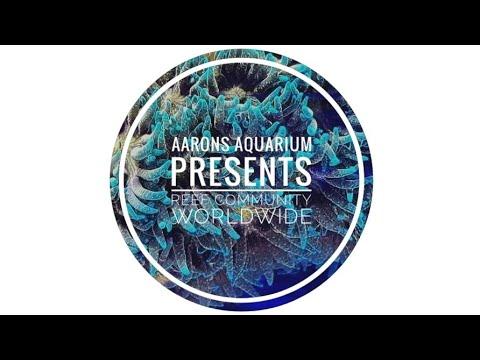 Aarons Aquarium Presents: Reef Community Worldwide