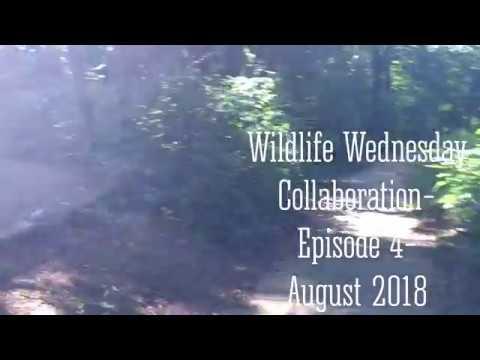 Wildlife Wednesday-Episode 4- Wildlife in our area!