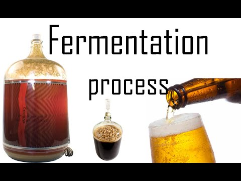 Fermentation process | fermentation biology in yeast