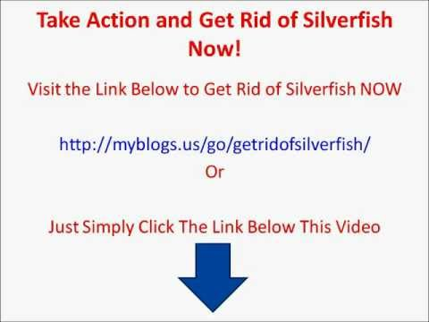 Get Rid of Silverfish - Discover How to Get Rid of Silverfish Fast !!!