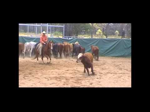 Squirt.. Cutting Horse doing his thing..