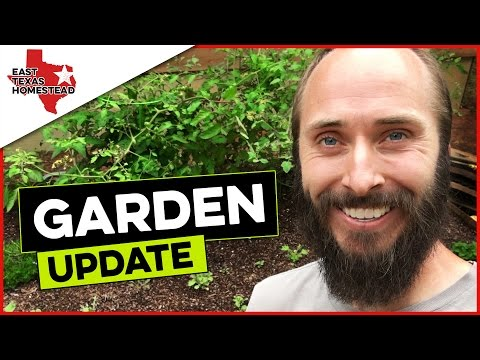 What's Working ✅ And What's Not ❌ | Raised Bed Garden Update on The Homestead | #EastTexasHomestead