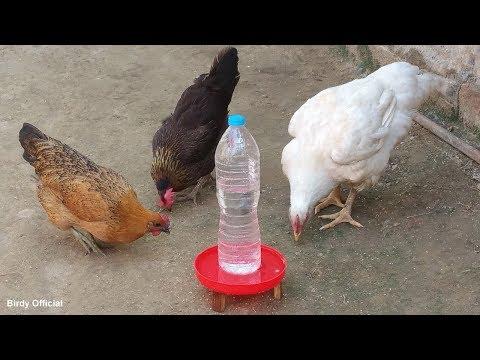 How To Make A Chicken Waterer | Chicken Water Feeder