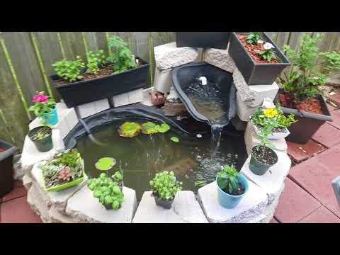 My 1st real above ground pond... Need advice please!