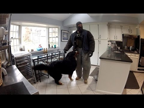 Watch This Fake Burglar Break Into Home To See How Dogs Will React