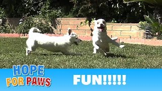 Family reunion - you won't believe how these puppies grew!