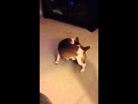 Buddy biting himself