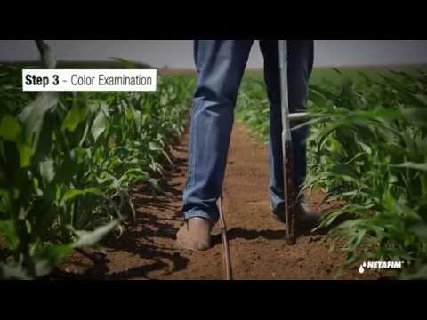 Soil Moisture Monitoring by Feel and Appearance