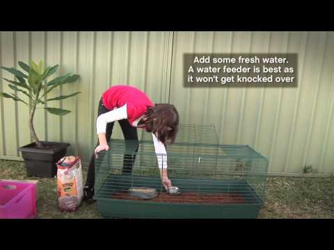 How to Use Kritter's Crumble in Rabbit Hutch.mov