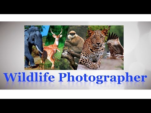 Career As Wildlife Photographer