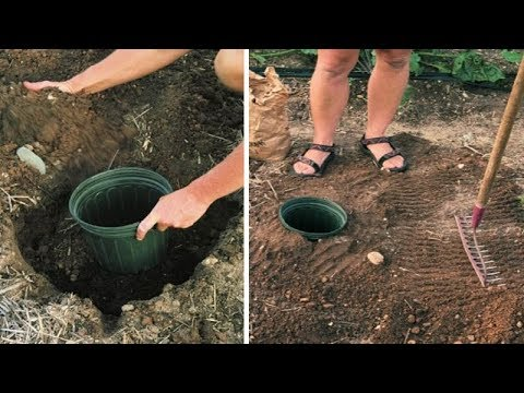Doing This In Your Garden Might Look Crazy But Actually Works