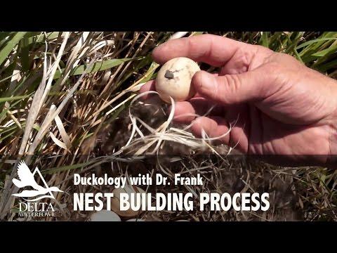 Nest Building Process