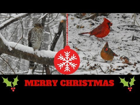 Merry Christmas from NaturesFairy ~ Backyard Friends