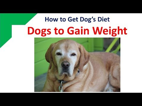 How To Get Dogs To Gain Weight - Dog's Diet