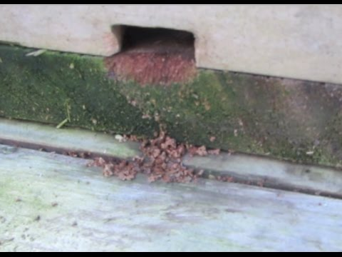 A mouse makes its nest in a bee hive