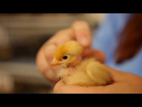 Chicks Love This • So Cute!