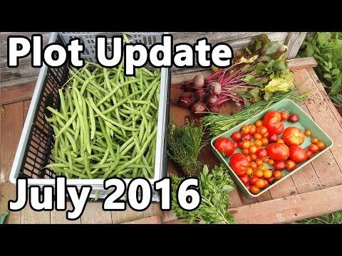 Plot Update July 2016