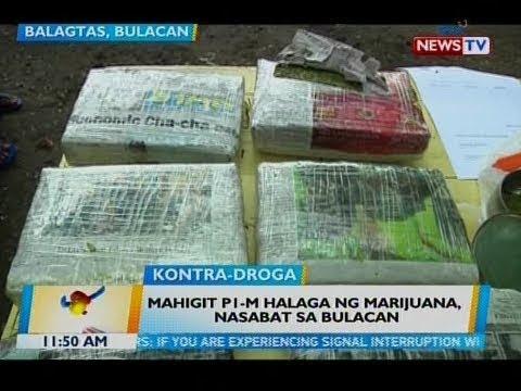 BT: Mahigit P1-M halaga ng marijuana, nasabat sa Bulacan