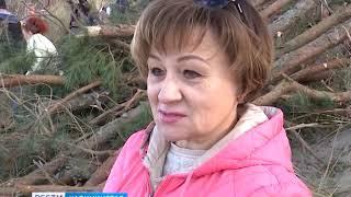 На Куршской косе укрепляют склоны авандюны вместе с волонтёрами