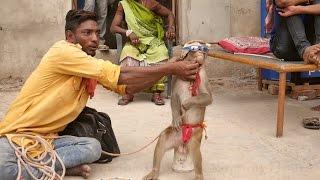 Funniest Monkey Drama in India.Comedy Bandar ka khel.कॉमेडी बन्दर का खेल,मदारी.Madaari tamasha funny