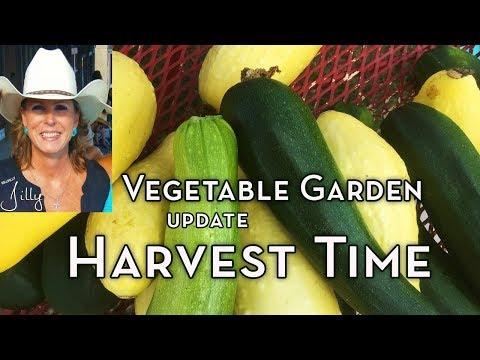 North Texas Vegetable Update - Memorial Day Weekend