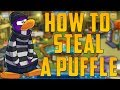Club Penguin: How To Steal A Puffle [Glitch]