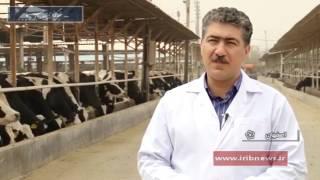 Iran exports Cattle Embryo to Azerbaijan Republic صادرات جنين گاو به جمهوري آذربايجان ايران