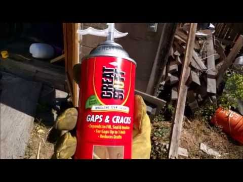 Permanently Remove Wasps From a Shed