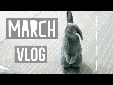 UK Rabbit Toys & Treats - MARCH VLOG '18