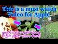 Download  ඔබේ ගෙවත්තේ ඇපල් පැලයක් වවන්නේ මෙහෙමයි. Let's plant an apple seedlings Plant. MP3,3GP,MP4