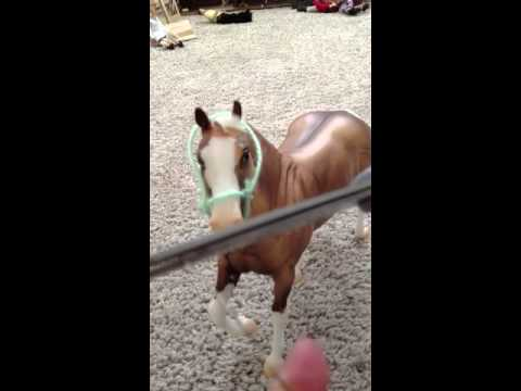 How to make a halter and lead rope
