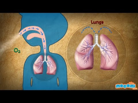 What is Panting/Heavy Breathing? Human Body Facts | Science for Kids | Educational Videos by Mocomi