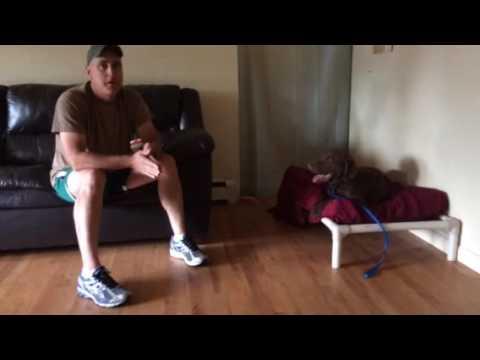 Video testimonial: Resource Guarding Rehabilitation