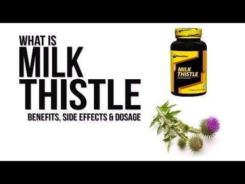 What is Milk Thistle? | Benefits, Side Effects & Dosage