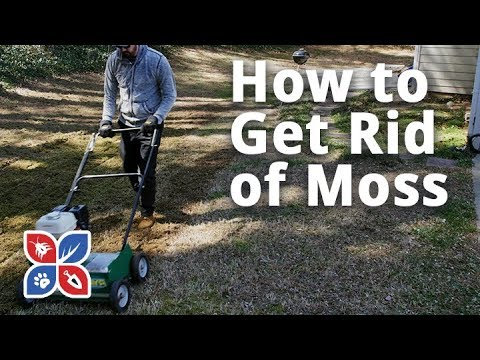 Do My Own Lawn Care - Episode 8 - How to Get Rid of Moss