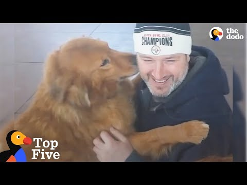 Dogs Reunited With Their Families | The Dodo Top 5