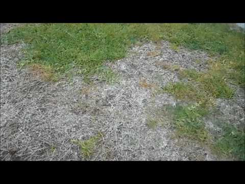 The difference in my lawn using screening to keep birds away from grass seed
