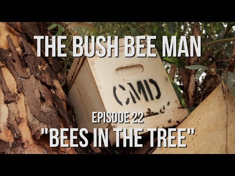 Removing a Wild Swarm from a Tree - Episode 22:
