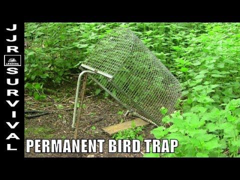 Metal Bird Trap