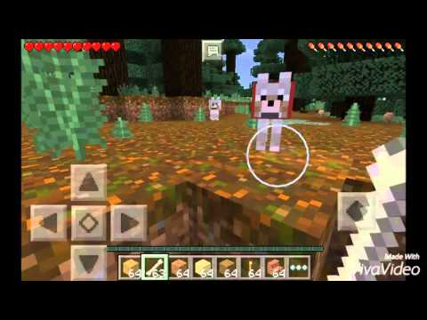 How to tame a oclet and a wolf in Minecraft PE edition.